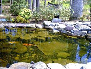 Koi 39 s pox treatment for The koy pond